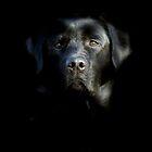 Who's afraid of the dark ? by Alan Mattison