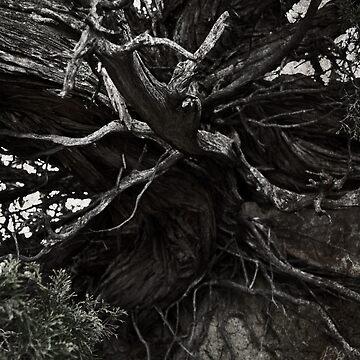 Old Tree by Kaitbrooks35