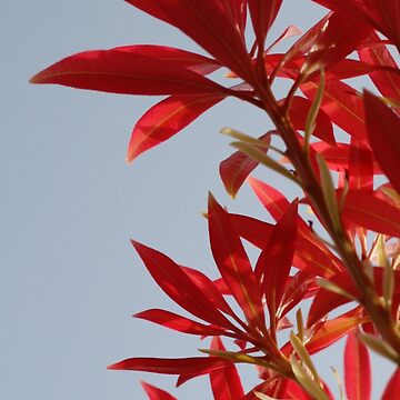 sunshiny pink leaves by kittymitch