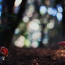 Toadstool by Bloom by Sam Wales