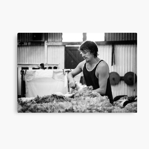 Shearing #11 ... Clifton Farm , Dumbleyung  Canvas Print