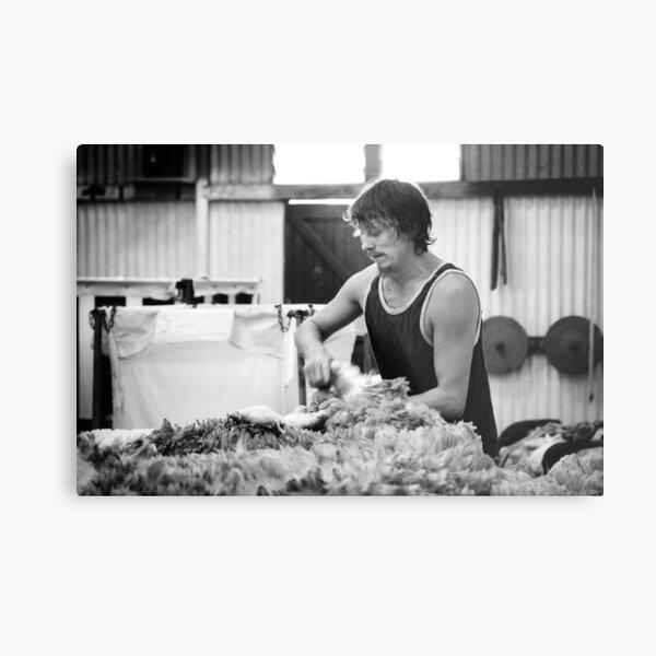 Shearing #11 ... Clifton Farm , Dumbleyung  Metal Print