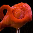 Flamingo <3 by Arjuna Ravikumar
