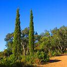 The Cypress Bros by jean-louis bouzou