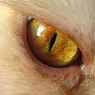Cat Eye by doval