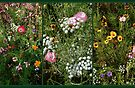 English Cottage Garden Collage 1 by Dorothy Berry-Lound