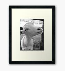 Goofy Goat Framed Print