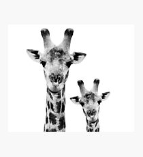 SAFARI PROFILE - GIRAFFES WHITE EDITION Photographic Print