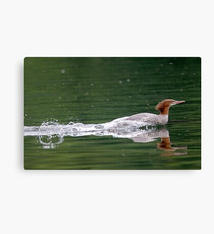 Smooooth Water Landing ! Canvas Print