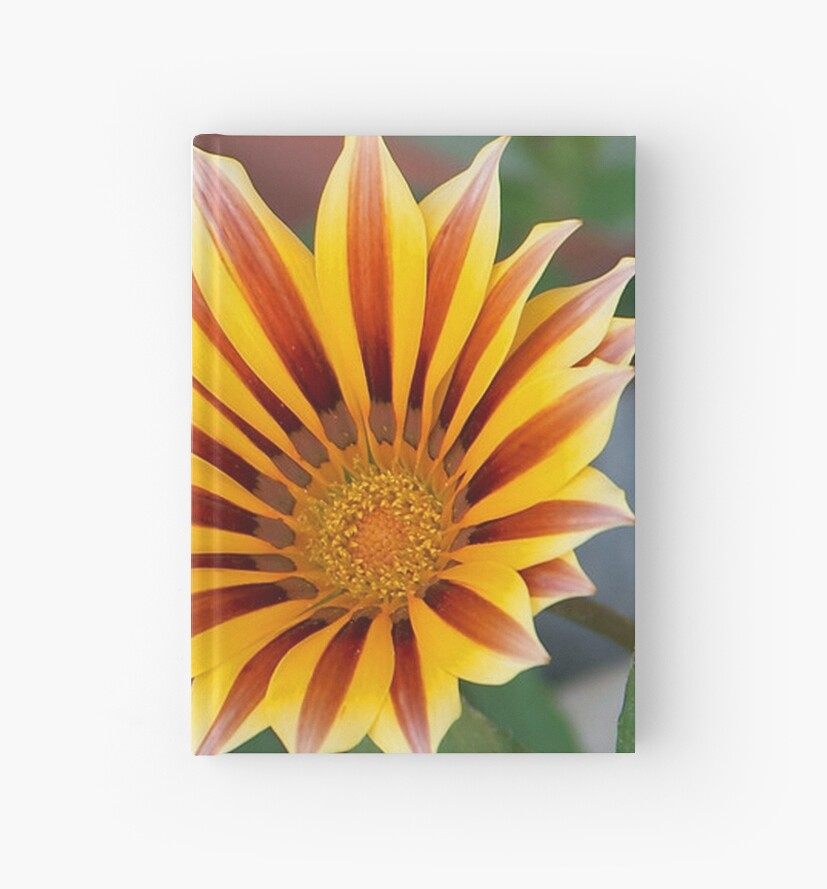 Gazania in Red, Gold and Green by taiche
