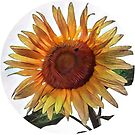 Sunflower circle by endomental Artistry