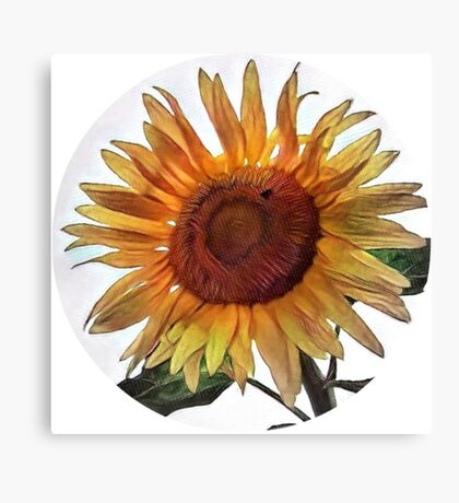Sunflower circle Canvas Print