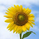 Sun Flower Against Blue Sky by ValeriesGallery