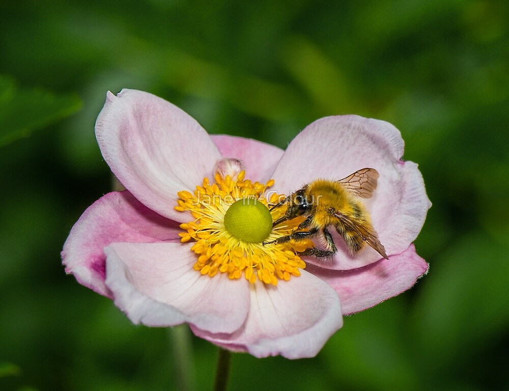 Bee Happy by Jane-in-Colour