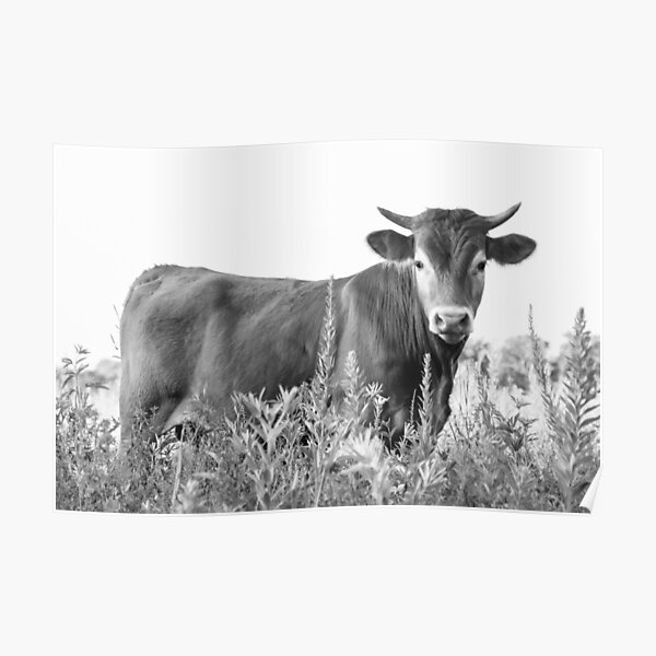 Moo Cow in the Flowers Poster