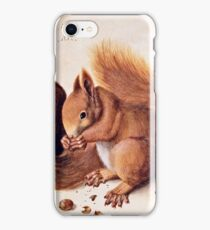 Albrecht Durer - Squirrels 1512  iPhone Case/Skin