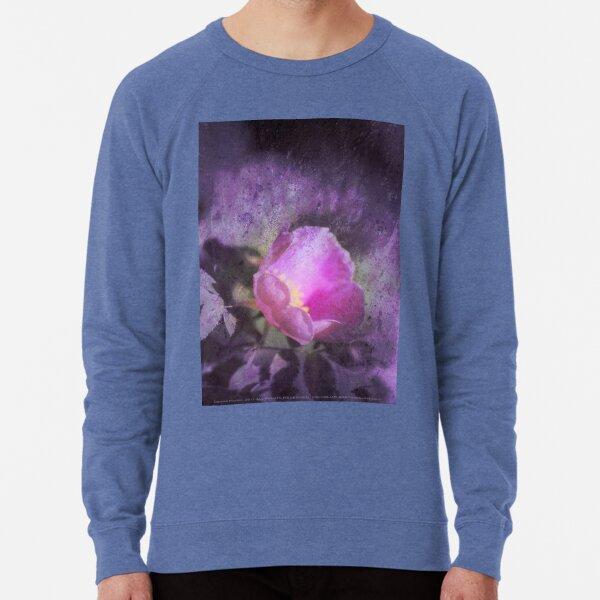 Old fashioned pink rose, purple texture Lightweight Sweatshirt