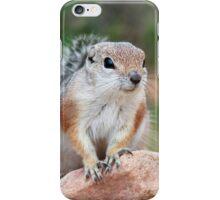 Antelope Ground Squirrel iPhone Case/Skin