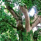 Ivy covered tree by Shulie1