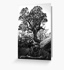 Twisted Trees in Garden of the Gods Greeting Card