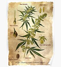 Marihuana plant Poster