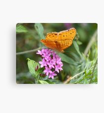 Male Cruiser Butterfly Canvas Print