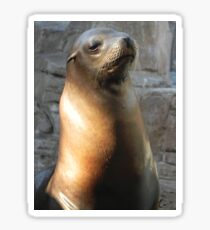 Stoic Sea Lion Sticker