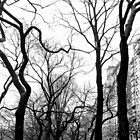 Central Park West by Matthew Siller