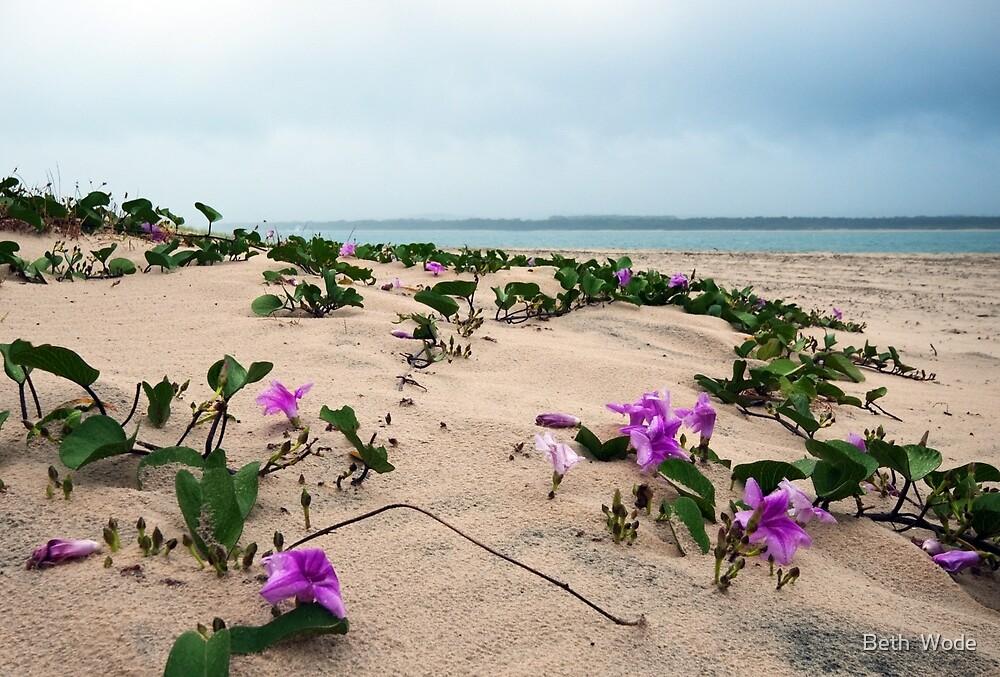 The Dunes - Inskip Point Qld Australia by Beth  Wode