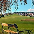 Bench under the tree | landscape photography by Patrick Jobst