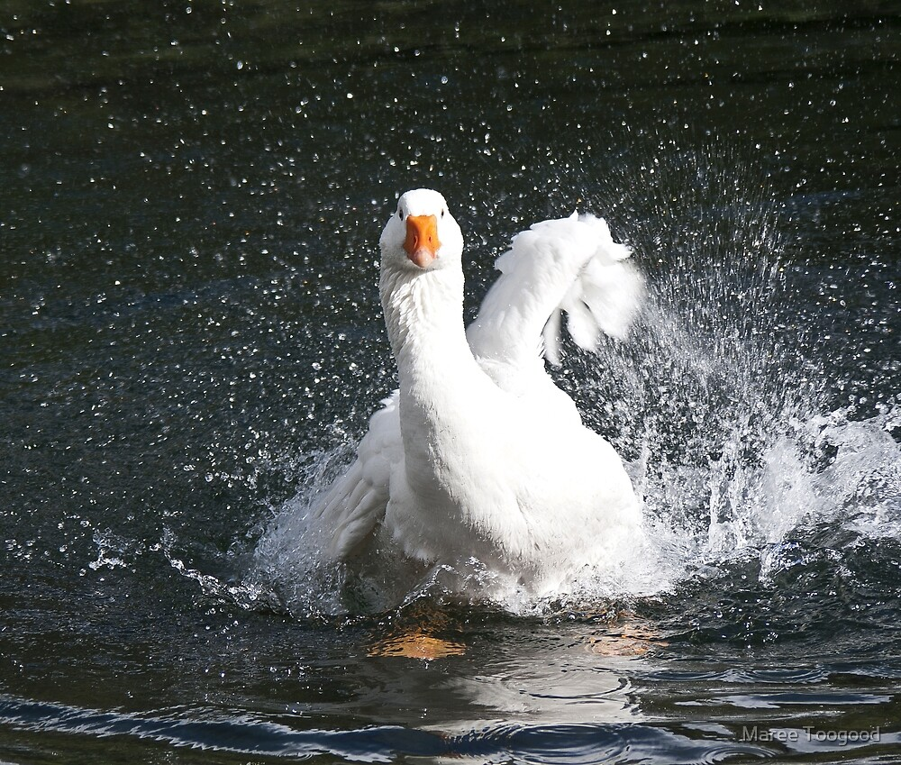 In A Flap by Maree Toogood