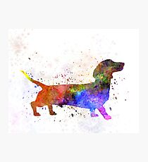 Short Haired Dachshund 01 in watercolor Photographic Print