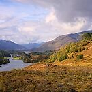 Glen Affric by Tim Haynes
