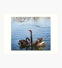 Black Swans Art Print