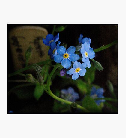 Blue Morning Photographic Print