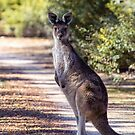 G'day Mate by Rick Playle