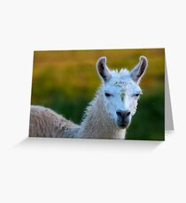Lama  Greeting Card