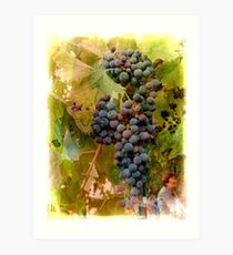 Waiting For Wine Art Print