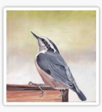 Red Breasted Nuthatch Sticker