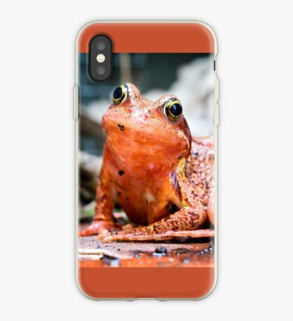 Colourful Frog iPhone Case
