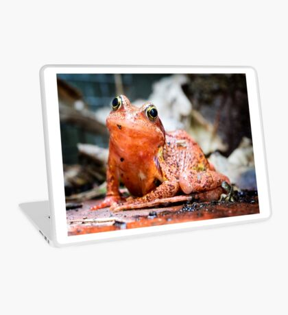 Colourful Frog Laptop Skin