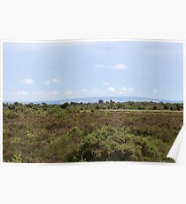 View across the New Forest Poster