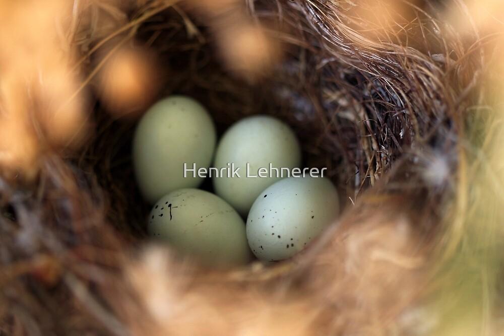 Bird Nest by Henrik Lehnerer