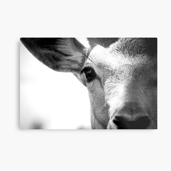monochrome deer  Metallbild