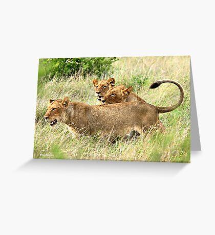 TRIPLE TROUBLE - THE LION - – Panthera leo - LEEU Greeting Card
