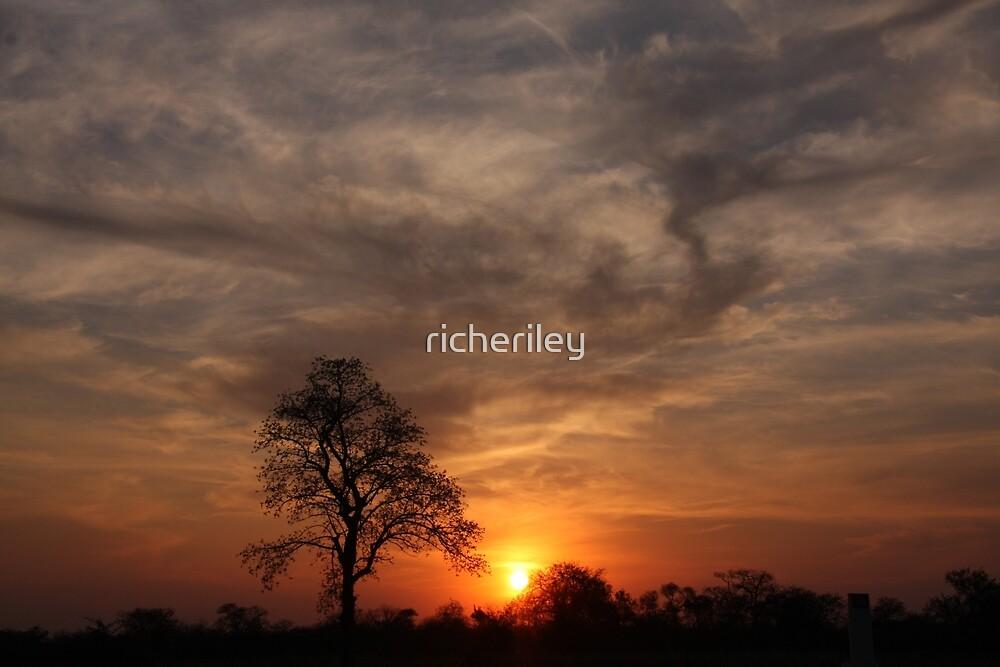 Lone Tree Sunset Botswana by richeriley