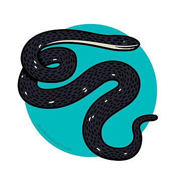 Black Rat Snake by BlueAsterStudio