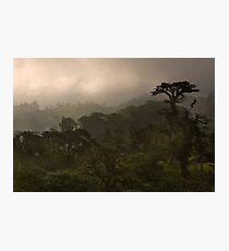 """Cloud Forest Sunset"" -- Costa Rica Photographic Print"