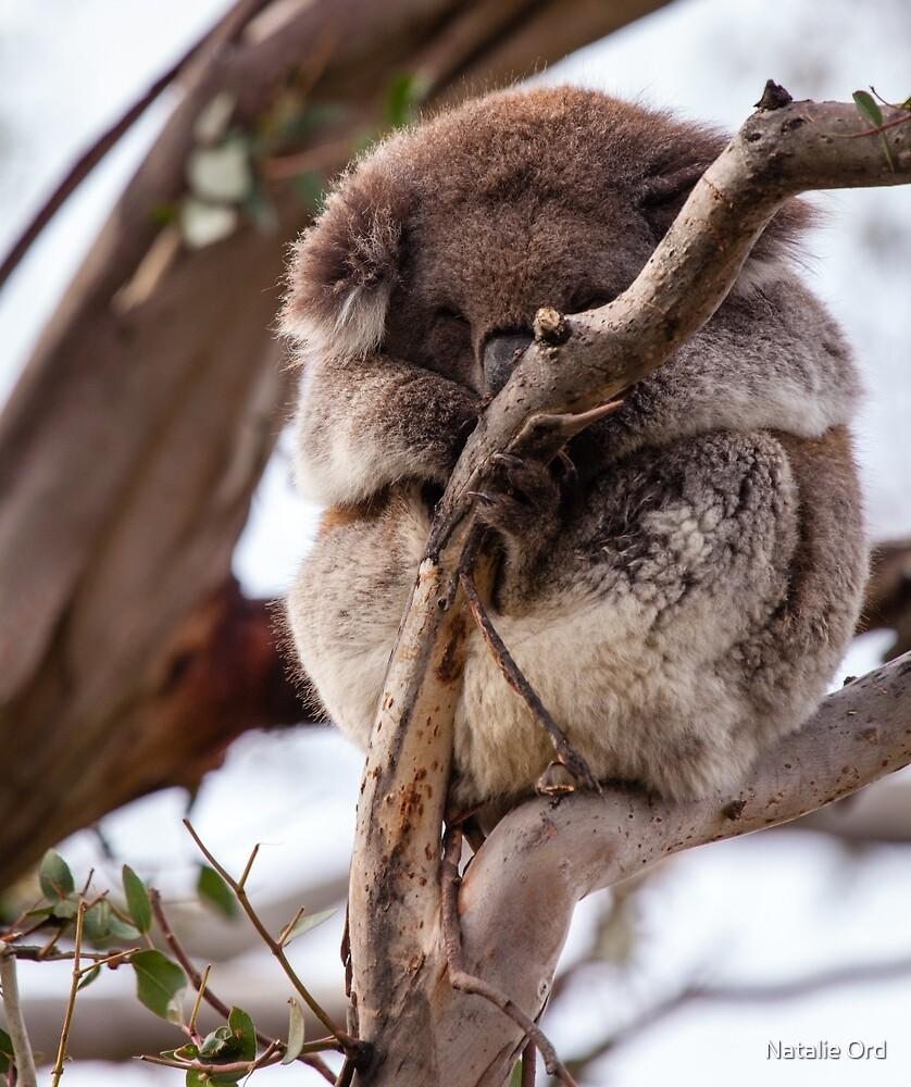 Snoozing Koala by Natalie Ord