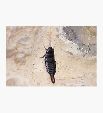 insect. Photographic Print
